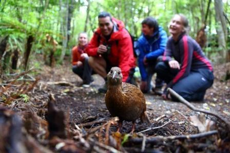 Trovolo - Southland Birdwatching #travel #photography #southland #newzealand #bluff #nature #wildlife #bird