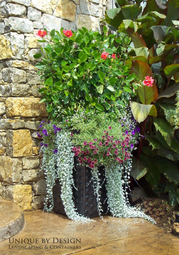 1567 best images about container gardens on pinterest - Tropical container garden ...