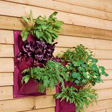 Hängetaschen in Aubergine für Blumen und Kräuter           bestellen - THE BRITISH SHOP - englisches Gartenzubehör online günstig kaufen