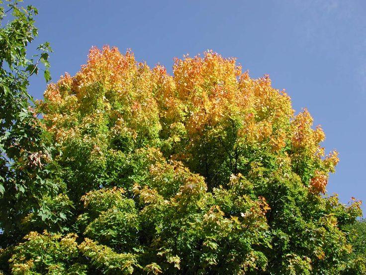 Ecco cosa può regalare l' #autunno qui in Val di Fassa - #trentino! Da ammirare, no?!