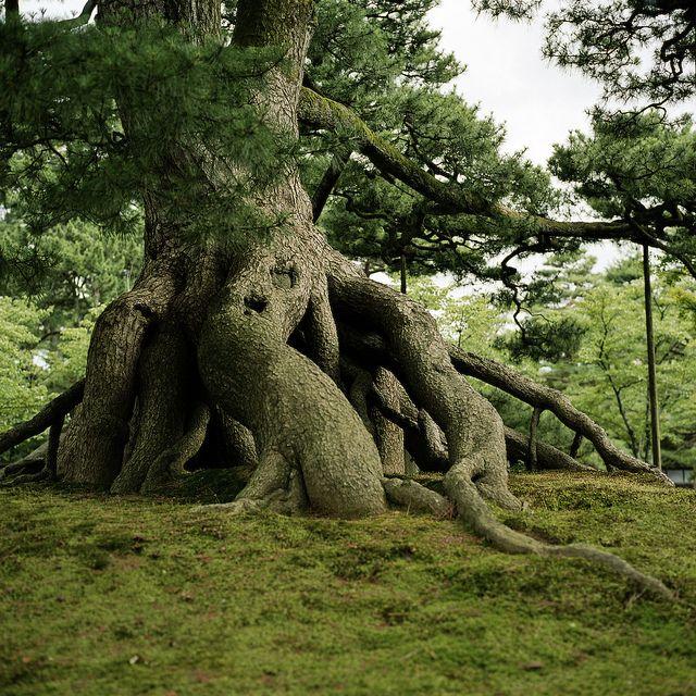 The Tree - Oak roots