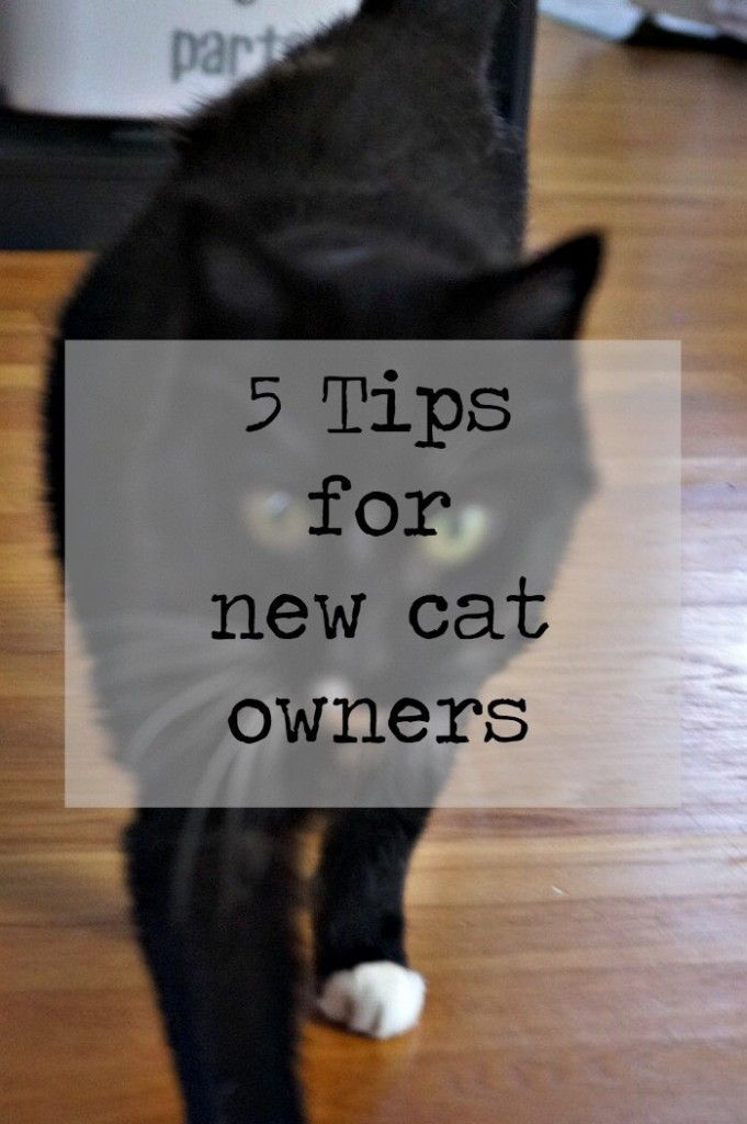 Thinking Of Adopting A New Cat Check Out These 5 Tips For New Cat