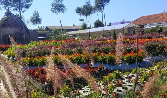 tempat wisata taman bunga begonia