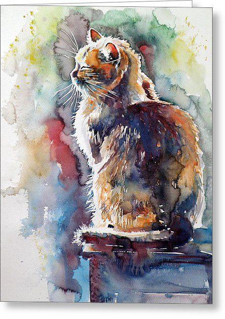 Cat In Backlight Greeting Card by Kovacs Anna Brigitta