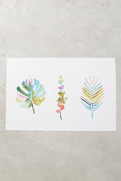 Succulent Spectrum Print #anthropologie