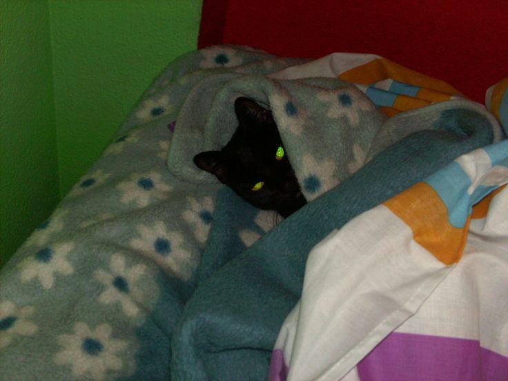 Salem entre mantas