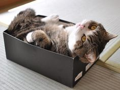 18 Hilarious Cats W 18 Hilarious Cats Who Desperately Try To Fit Inside A Small Box