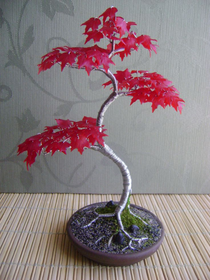Bonsai Tree, some kind of maple, I suppose. Heavily wired at the moment but the form of the trunk is going to be lovely.