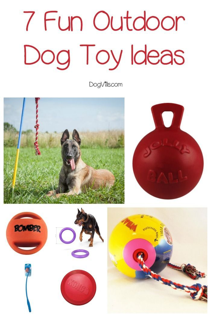 7 Exciting Outdoor Dog Toy Ideas To Buy Your Pup Now Outdoor Dog