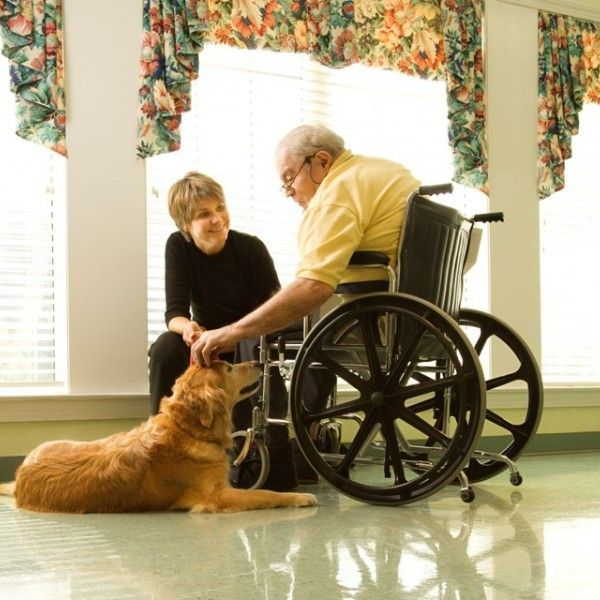 3 Steps to Making Your Dog A Therapy Dog | WOOFipedia by The American Kennel Club