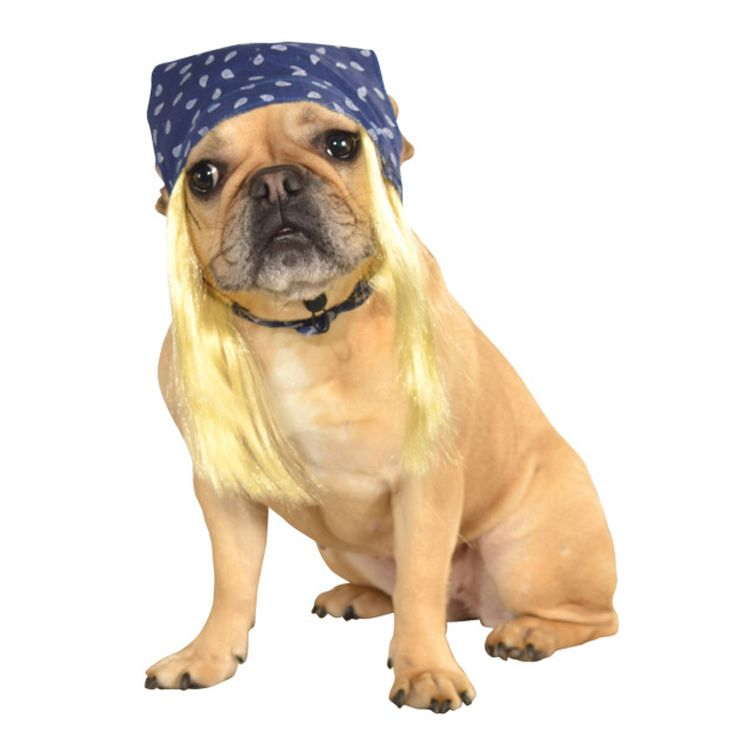 your favorite hard rock legends only wish they still looked this good this easy costume easy costumesdog halloween - Dogs With Halloween Costumes On