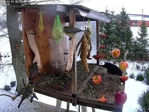 Ptaki zimą   123pomyslnaedukacje