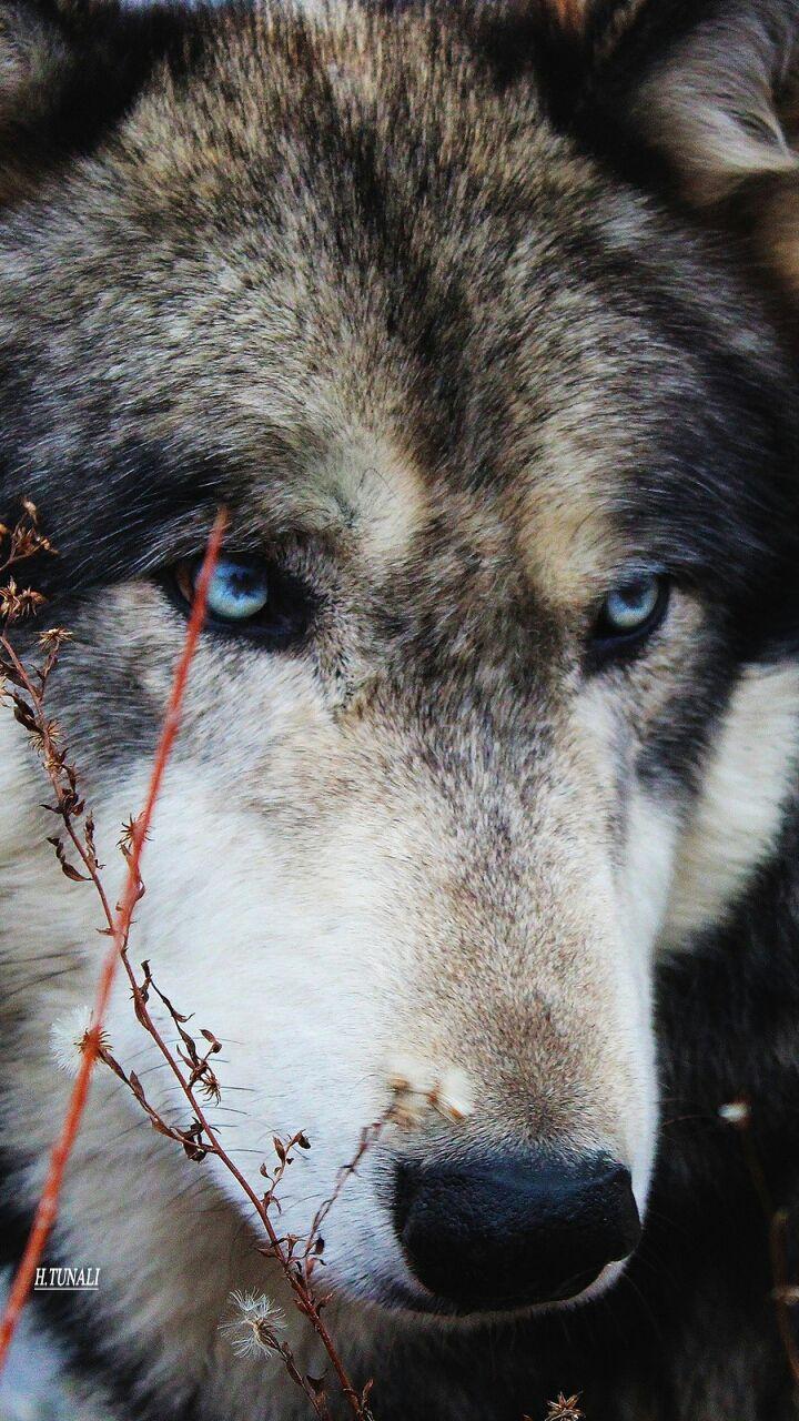 <3 wolf!