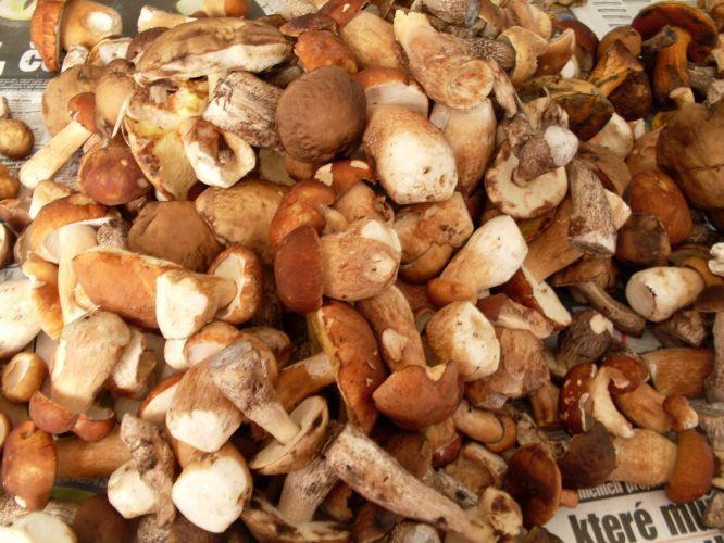 Staročeský houbový kuba
