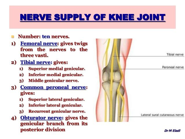 nerve supply of knee joint  number: ten nerves. 1) femoral nerve, Muscles