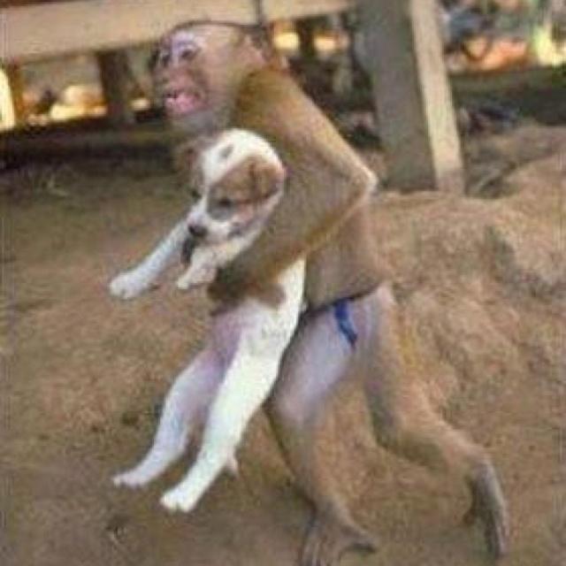 Thailandia: durante un'inondazione una scimmia salva il cucciolo di cane. Un'immagine tenerissima e piena di quell'amore vero e disinteressato che solo gli animali sono in grado di dare.