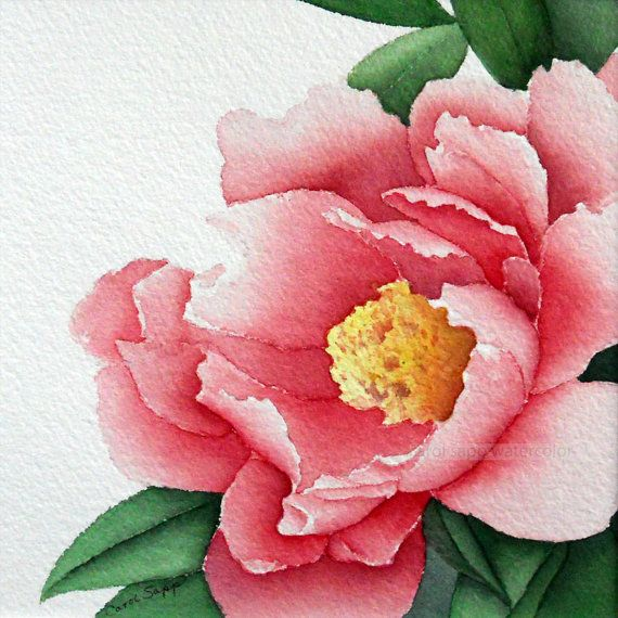 rose peony watercolor flower painting 12 x 12 by carolsapp on Etsy, $25.00