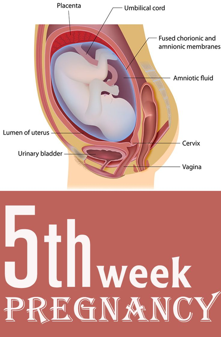 5 Weeks Pregnant - Symptoms, Baby Development, Tips And Body Changes