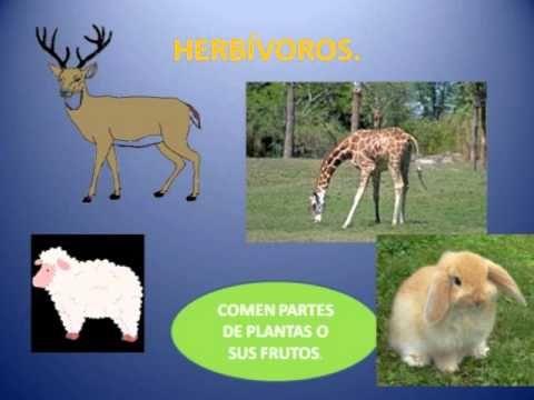 ANIMALES HERBÍVOROS, OMNÍVOROS Y CARNÍVOROS - YouTube