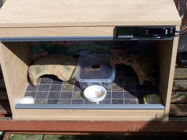 How To Setup Basic Leopard Gecko Vivarium - Reptile Forums