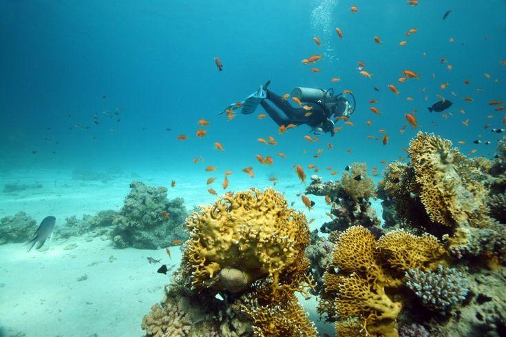 Diving, El Gouna, Egypt