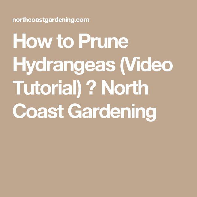 how to prune hydrangeas video tutorial - When To Trim Hydrangea