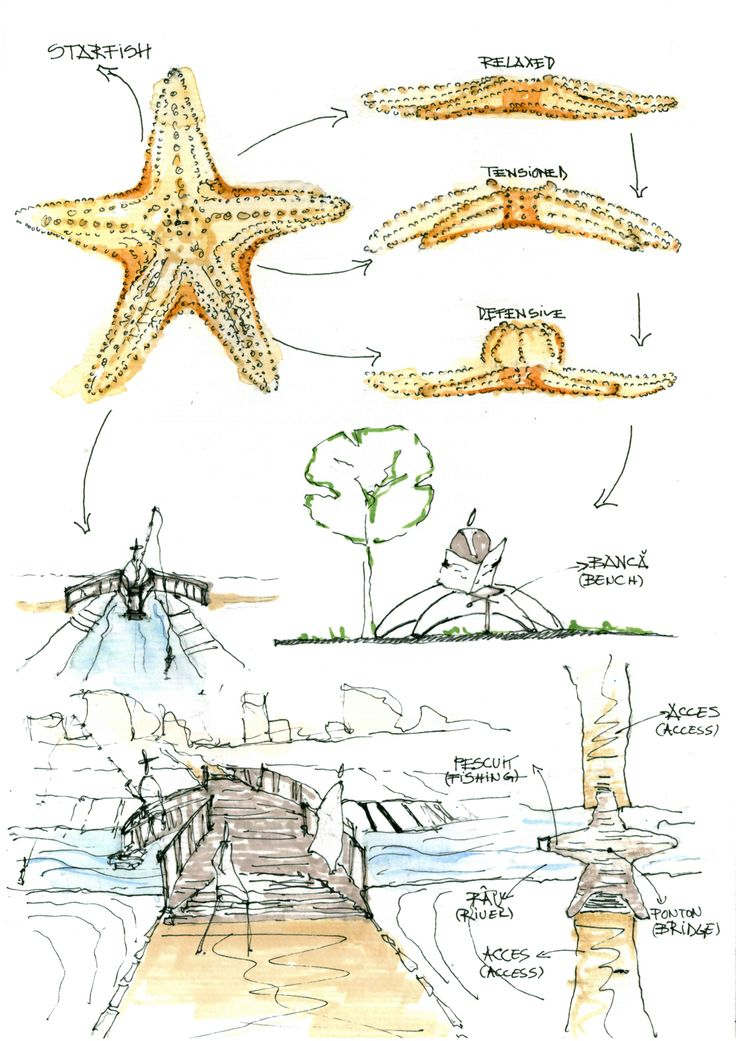 Starfish idea.© 2012 by Alexandru Mihai Ticalo. All rights reserved