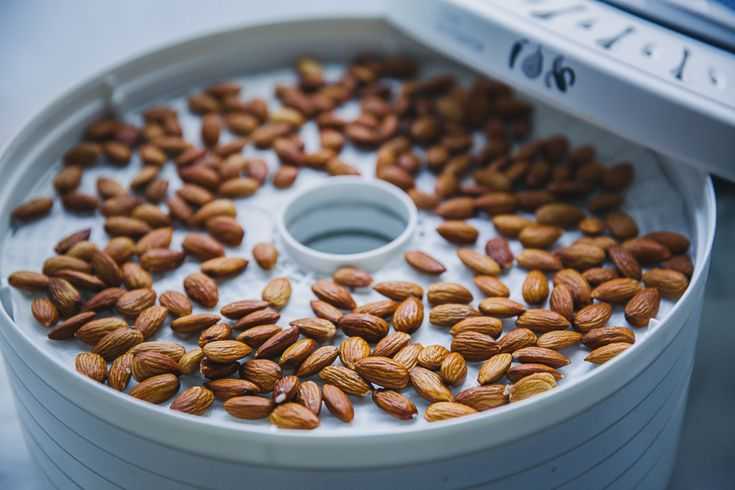 Activated almonds in dehydrator.
