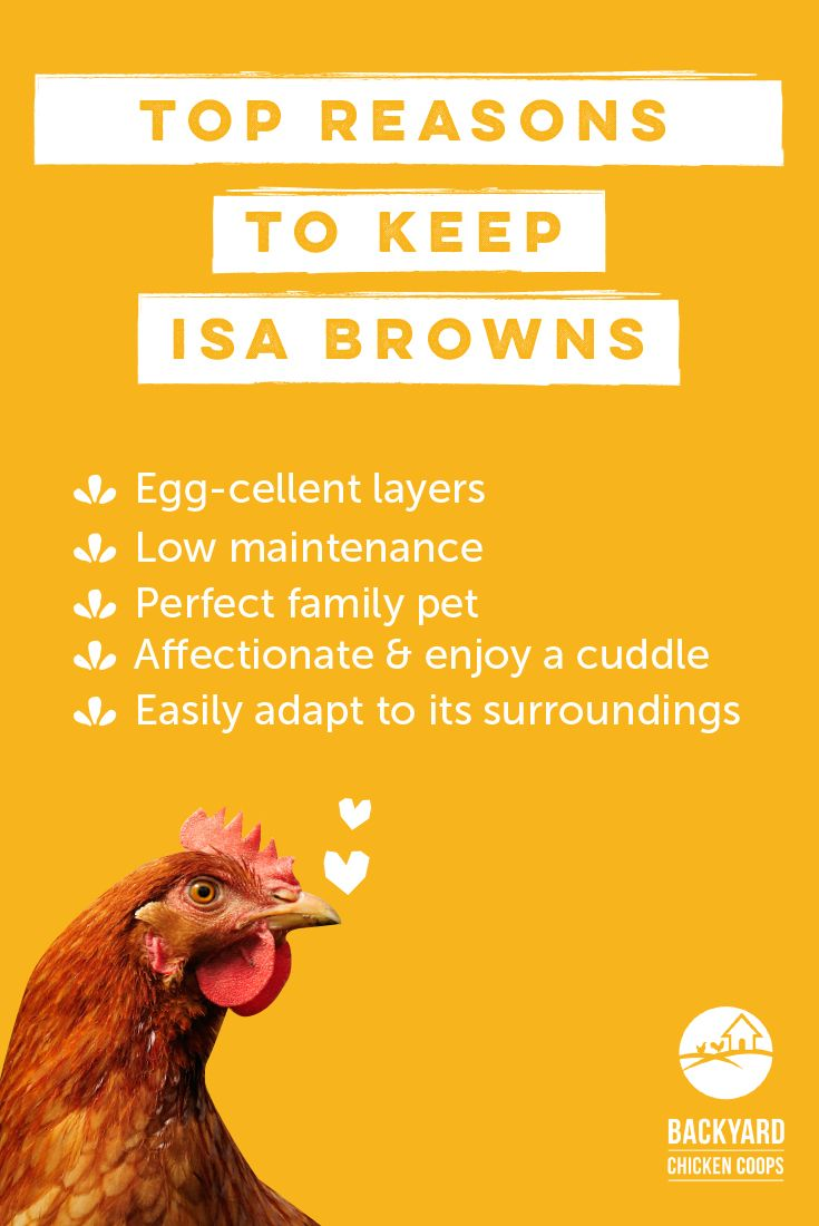 31 best isa brown chickens images on pinterest chicken coops