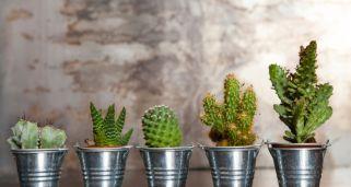 Cactus y plantas crasas