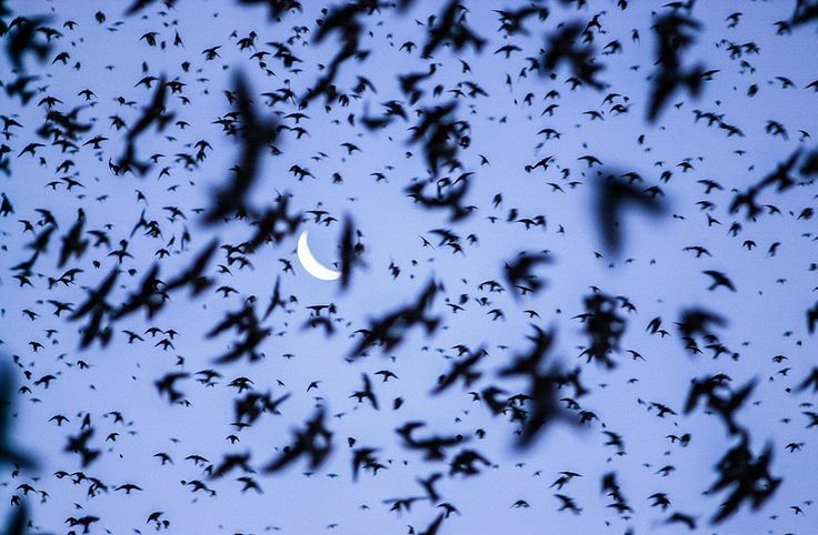 Andorinhas na Lua by Jair Ferreira on 500px