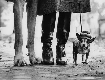 No collection of dog photography would be complete without images by Eliot Erwitt.  He had a knack for photographing dogs as though they were human with all their foibles and quirks.