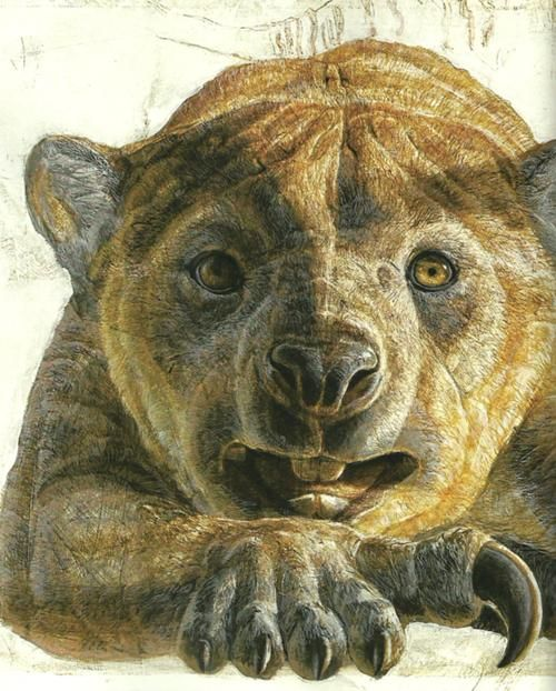 The Marsupial Lion (Thylacoleo carnifex; or meat cutting-marsupial-lion; or pouch-lion-butcher) was a large, carnivorous marsupial mammal that lived in Australia from the early to late Pleistocene Era (1,600,000–46,000 years ago). Despite its name, it wasn't part of the cat family, but was more closely related to wombats. It was one of the apex predators at its time, and probably fed on early man.