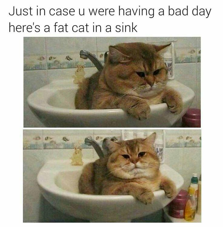 Meine Sexi Kätzchen com