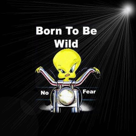 Born to be wild funny quotes quote lol funny quote funny ...