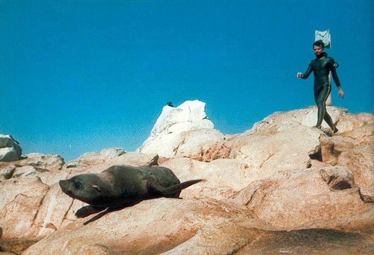 Морские львы Южной Африки