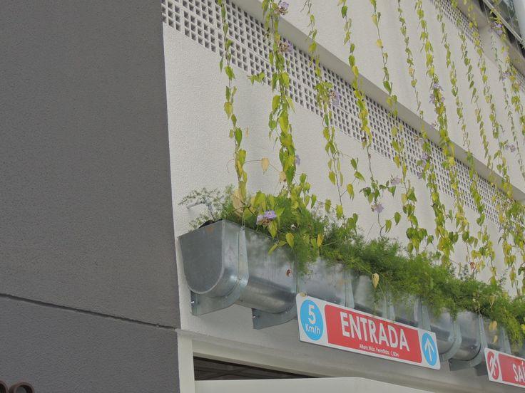 Diminui a poluição do ar, melhorando a qualidade e umidade do ar.