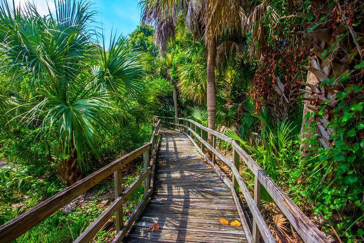Hammock Trail in Cocoa beach Florida