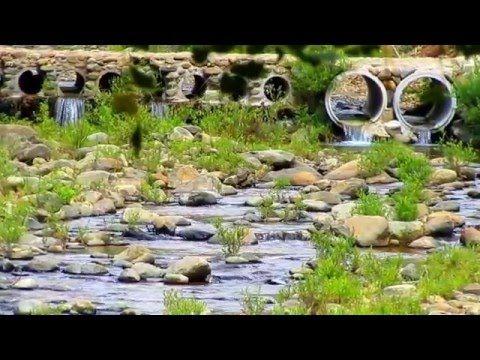 CE SĂ FILMĂM ÎNTR-O PĂDURE Film Muzical Cu Natura Mp4 HD