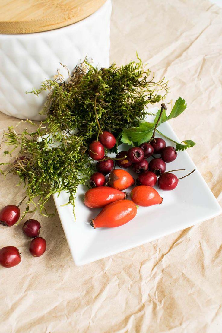 Jeder der in die Welt der Kräuter eintaucht sollte sich gut mit Pflanzen auskennen um auch die richtige zu erkennen. Kräuterwanderungen helfen ...