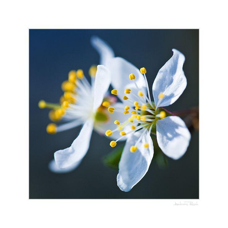 Welcome Springtime by AndreasResch.deviantart.com on @DeviantArt