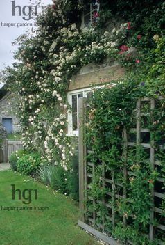 Harpur Garden Images :: slater43 Oil tank beside house wall disguised / hidden by trellis covered with Lonicera Rosa Rose window Design: David Stevens for Kevin Slater, Parwich, Derbyshire. Creamery Cottage, Parwich, Derbyshire, UK Jerry Harpur Oil, tank, house, wall, disguised, hidden, trellis, covered, Lonicera, Rosa, Rose, window, Creamery Cottage, Parwich, Derbyshire,, UK, Jerry Harpur,