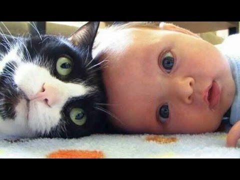 Cute Cats and Dogs Love Babies Compilation 2015 [NEW HD] - YouTube