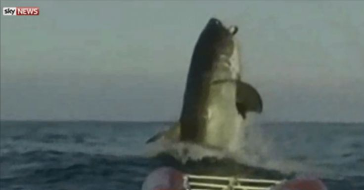 The Today show hosts are speechless when they see the footage of this giant Shark.