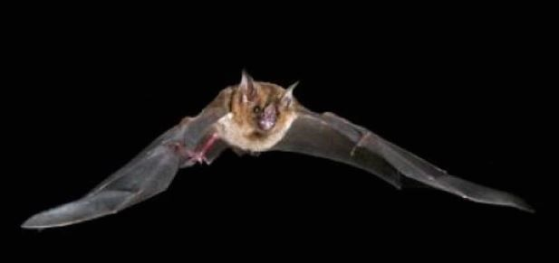 Bats Power Take-Off Using Recycled Energy