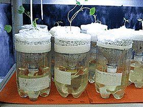 Homemade Hydroponic Units