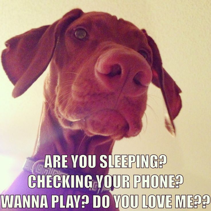 No. I'm not sleeping No. I'm not on my phone YES YES YES!!! I WILL ALWAYS WANT TO PLAY WITH YOU AND NEVER EVER EVER STOP LOVING YOU!!!!
