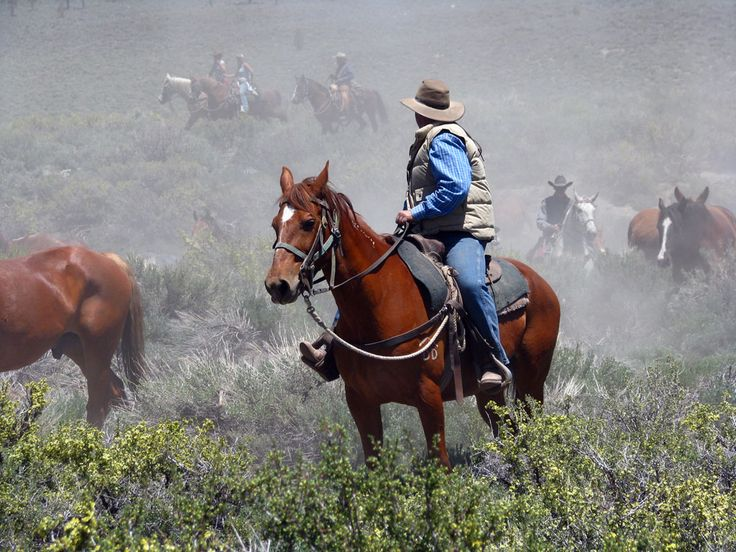 1000 Images About Working Cow Horse On Pinterest