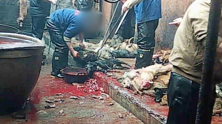 A deeply disturbing PETA Asia undercover investigation reveals that dogs are bludgeoned and killed so that their skin can be turned into leather accessories.
