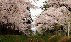 津軽鉄道 線路 桜